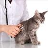 Ветеринарные клиники в Яшкуле